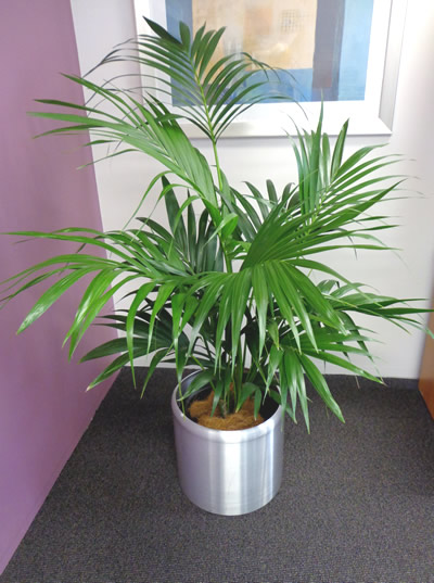 PlantCare Indoor Plant Hire - Sunshine Coast
